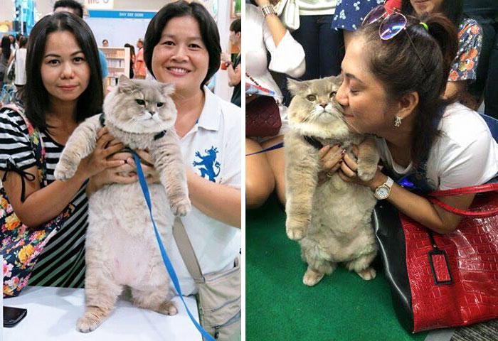 Самый пушистый кот в мире: такого красавца нельзя не любить!