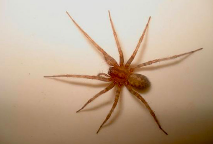 примета паук полз по плечу термобелье