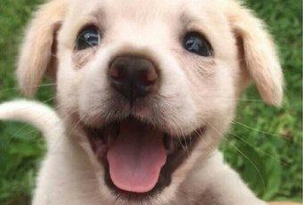 Счастья полные глаза