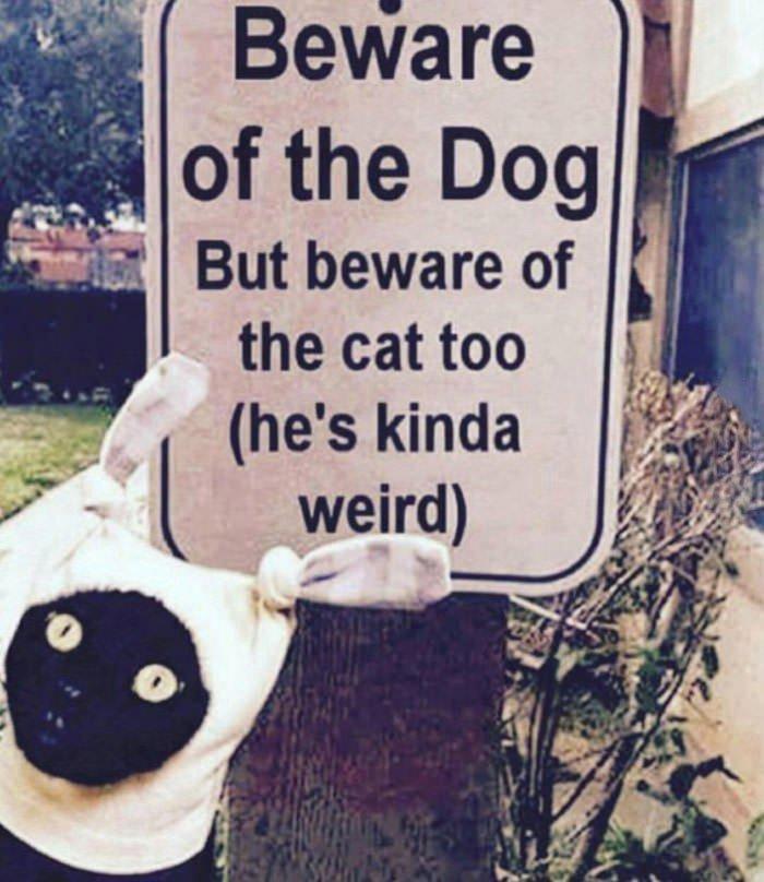 Остерегайтесь собаки! Хотя, кота тоже остерегайтесь... (он немного странный)