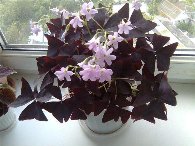 Елена Курилова раскрыла секрет, какие 10 цветков принесут счастье и деньги в ваш дом!